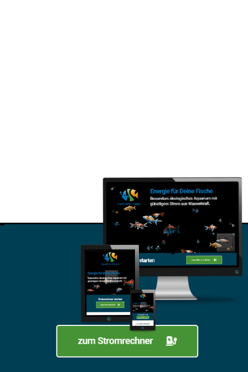 Erfolgreich online sein - Referenzen 33